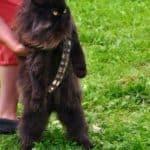 Permítame presentarle: Mewbacca!