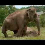 Elephants by 20 Combines years back