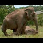 Elefanterne efter 20 Kombinerer år tilbage