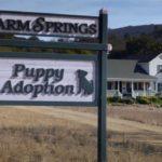 Puppy Love: Eine besondere Freundschaft zwischen einem Pferd und einem Welpen