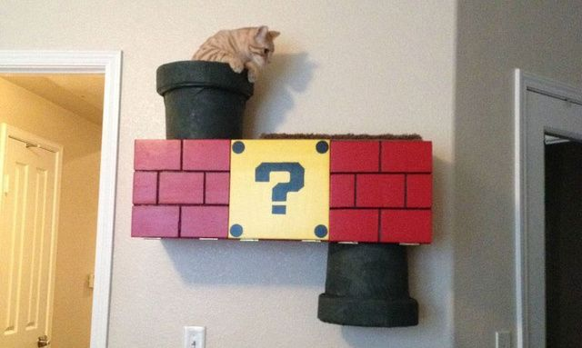 Painting Cat Box Fort