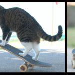Didget, die Skater-Katze