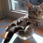 Al servicio del día: Gato en el tarro