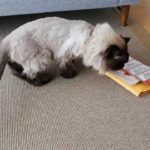 Leaflet distribution of cat food smell