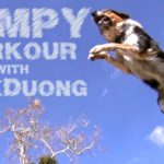 Der Parkourhund – Parkour Dog