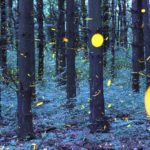 Fireflies in fast motion – De Firefly Timelapse