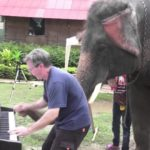 Klavierduo with Peter them elephant
