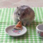 Kleine Hamster het eten van een kleine pizza