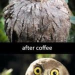 The magic of coffee