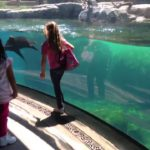Sea lions cares for little girl