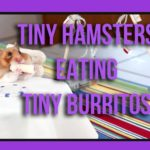 Tiny Hamsterit Syöminen Tiny Burritos