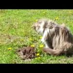Le chat et le grain de beauté ou les chats sont des abrutis