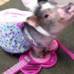 Mini Piggy Fingerborg kan spela piano