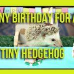 Een egeltje viert zijn kleine verjaardag