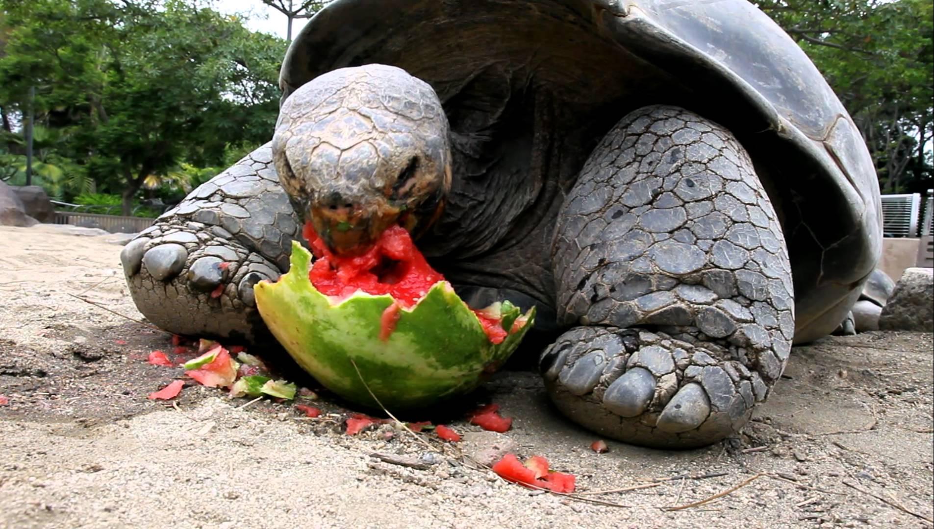 Can Turtles Eat Dog Food