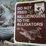 No hallucinogens for alligators