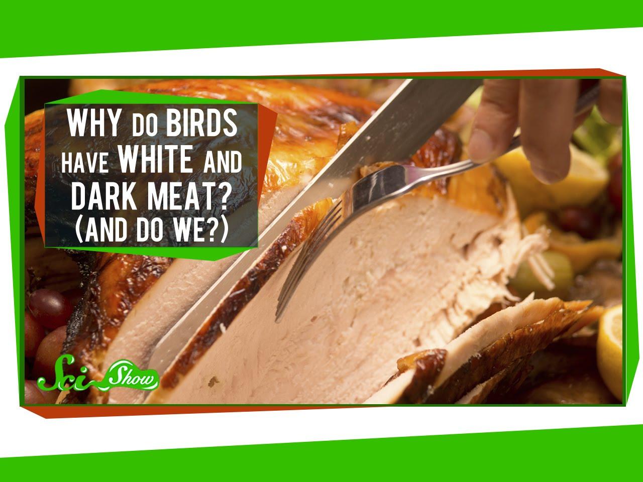 Warum haben Vögel weisses und dunkles Fleisch?