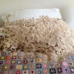 Wasps nest in bed