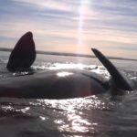 Hoe is gestrand in een kajak op een walvis