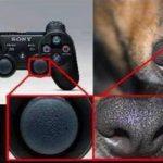 Woraus Playstation-Controller wirklich bestehen