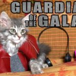 Guardians Of The Galaxy: Cute Kitten Version