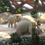 Slip av en baby elefant