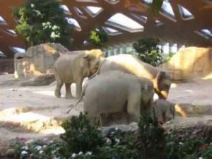 Ausrutscher eines Baby Elefanten