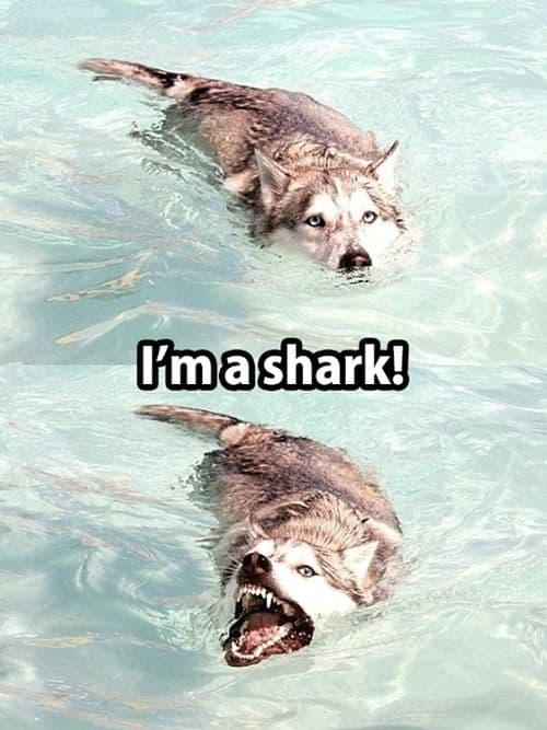 Jestem Shark!