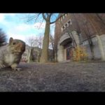 Squirrel steals GoPro and filming from the tree