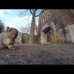 Eichhörnchen klaut GoPro und filmt aus dem Baum