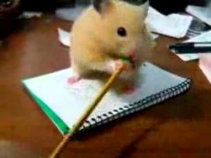Hamster can't eat Pencil