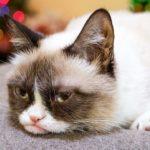 Hard To Be Kot w Boże Narodzenie – Grumpy Cat gwiazdek