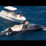 Mann auf totem Wal surft