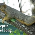 Lullaby of the day: Narcoleptic Squirrel Song