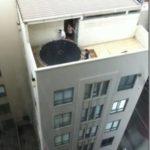 Häromdagen på taket