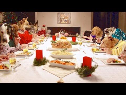 13 hunde und 1 katze essen mit menschlichen h nden dravens tales from the crypt. Black Bedroom Furniture Sets. Home Design Ideas