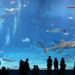 The second largest aquarium in the world