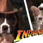 Indiana Bones e os Raiders of the Lost Bark