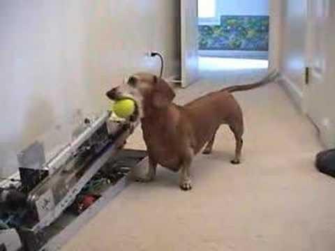Jerry der Hund und sein Ball-Roboter