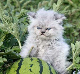 Das ist meine Melone