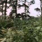 Monty Python – Mosquito Hunting