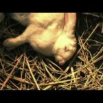 Rabbit Horror 3D – Remolque