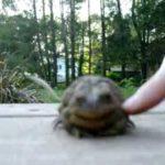 Coccole con una rana