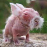 Bébé Wombat