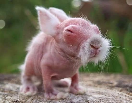 Dziecko wombat