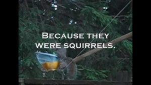 Anti Eichhörnchen Katapult