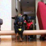 Batdog en Robin te redden van de dag