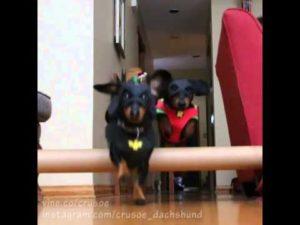 Batdog und Robin retten den Tag