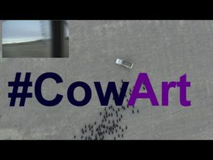 CowArt with a Drone