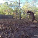 Hond Fetch Fails